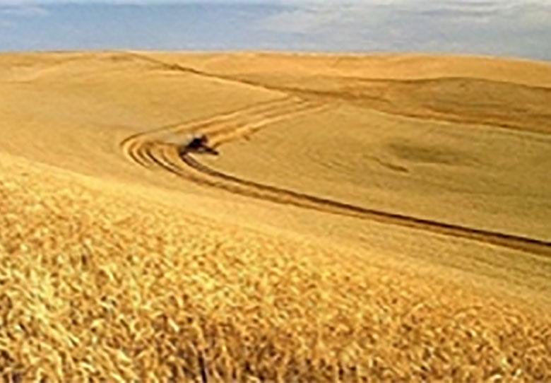 ابزار بازرگانی در خدمت مدیریت تولید کشاورزی آمریکا