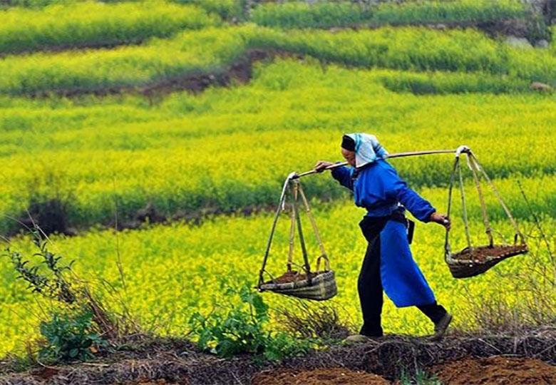 کشاورزی شاگرد اول اقتصاد مقاومتی است