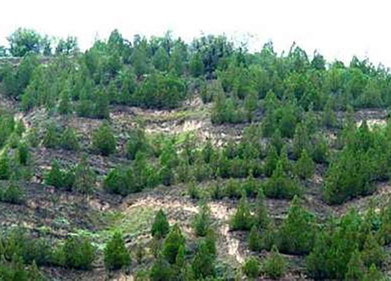 ۲۰۰ هکتار جنگلکاری امسال در خراسان شمالی اجرا می شود
