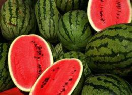 استفاده از پودر بهداشتی در رشد هندوانه، غیرممکن است