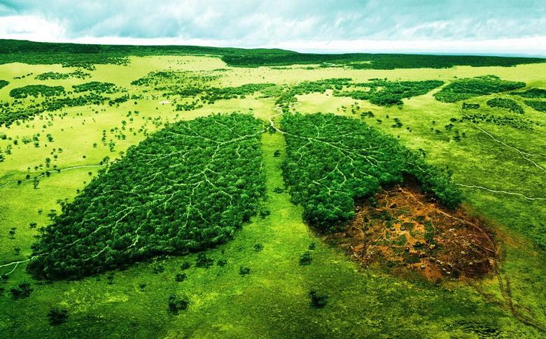 لطمهزنندگان به محیط زیست ۳ تا ۵ برابر خسارت وارده جریمه میشوند