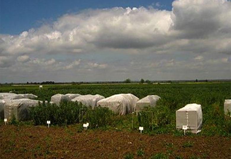 توصیههای هواشناسی کشاورزی برای سه روز