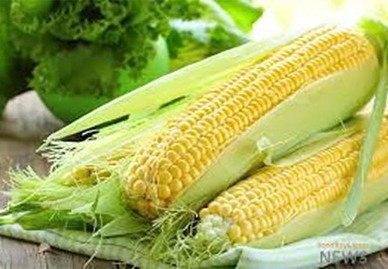 کاهش ۱۰۰ تومانی قیمت ذرت در بازار با تدبیر وزارت جهاد کشاورزی