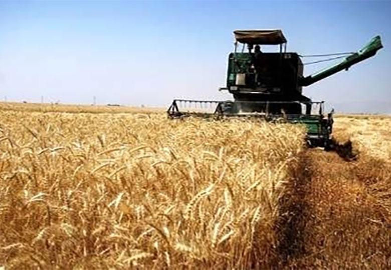 گزارش فائو در رابطه با کاهش تولید گندم مربوط به سال گذشته است