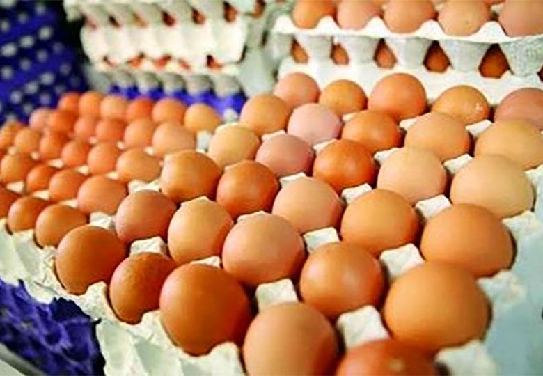 افزایش قیمت تخم مرغ مقطعی است