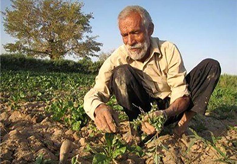 کشاورزی در مرز بازنشستگی