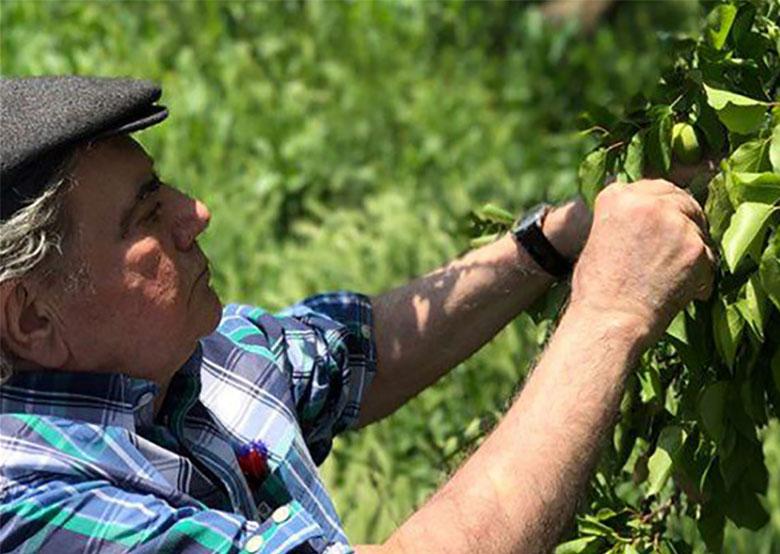 تصاویر تازه محمدرضا شجریان در باغ شخصیاش