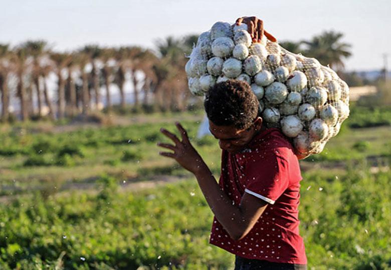 احتمال کاهش قیمت هندوانه و طالبی
