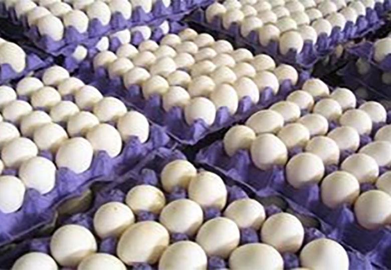 آخرین قیمت تخم مرغ در میادین میوه وتره بار