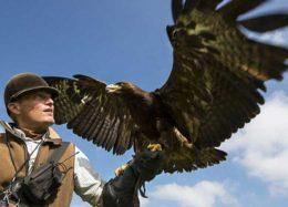 شکار با عقاب طلایی