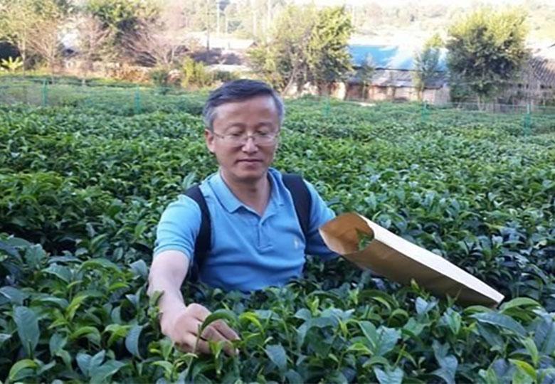 فاششدن راز طعم چای با رمزگشایی ژنتیکی
