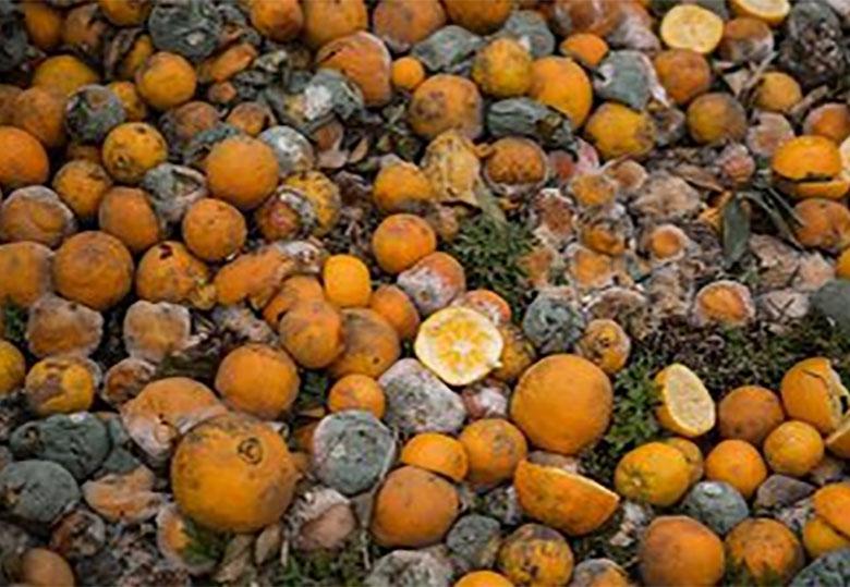 سالانه ۳۰ تا ۳۵ درصد محصولات کشاورزی ایران هدر می رود