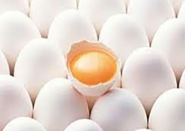 رایزنی برای صادرات تخممرغ به همسایگان