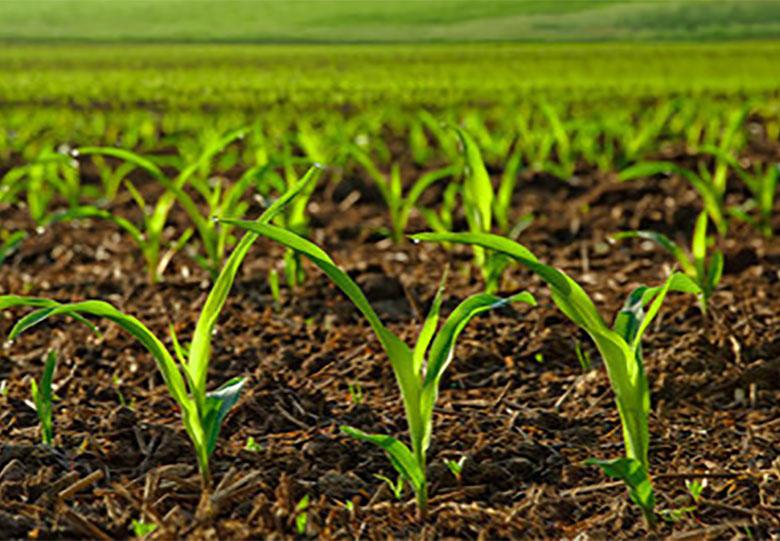 افزایش هفت درصدی سطح زیر کشت لوبیا در مزارع چهارمحال و بختیاری