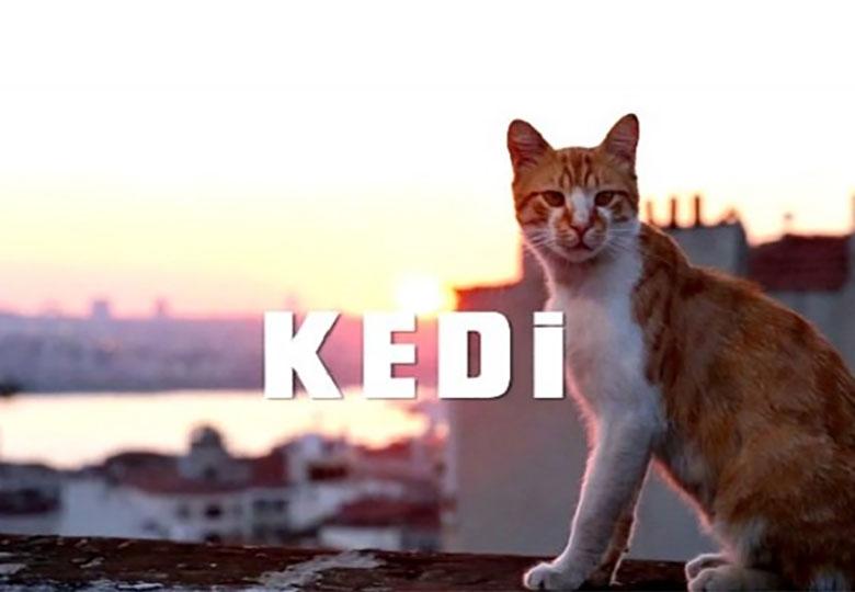 گربههای استانبول جهانی شدند