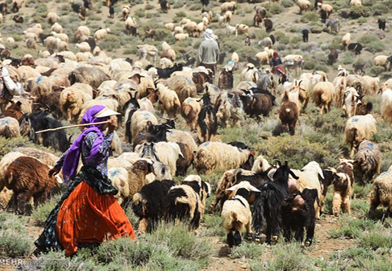 عشایر سالانه ۱۹۰ هزار تن گوشت قرمز تولید می کنند