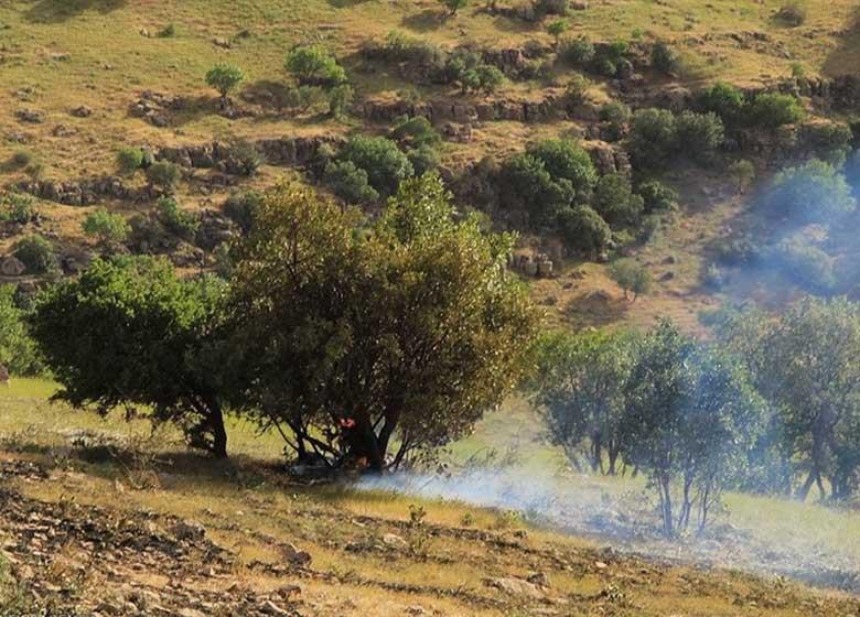 تشکیل تیمهای واکنش سریع برای اطفای حریق در مراتع و جنگلهای استان تهران