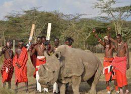 جنگ متفاوت مردان قبیله ماسای با ارتش انگلیس