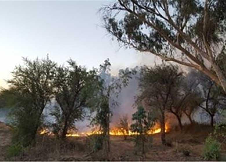 گسترش آتش سوزی جنگلهای اندیمشک