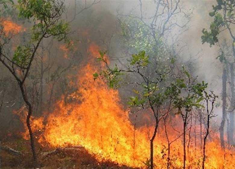 اعمال اشد مجازات و حبس برای آتشافروزان جنگلها