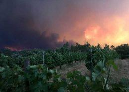 آتشسوزی مرگبار در جنگلهای پرتغال با ۱۱۶ کشته و زخمی