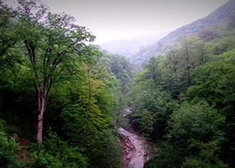 نابودی جنگلهای هیرکانی به دلیل برداشت بیرویه خاک و قطع درختان