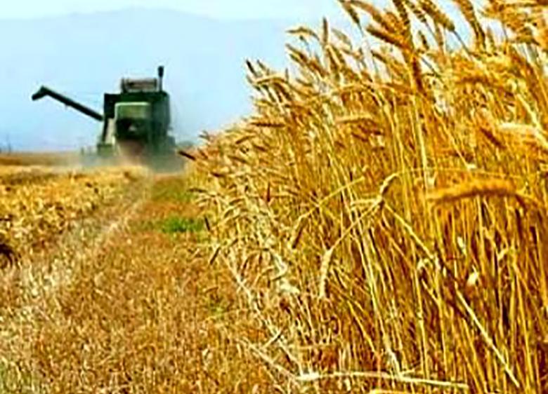 وضعیت صنعت غذا و کشاورزی در اهداف برنامه ششم