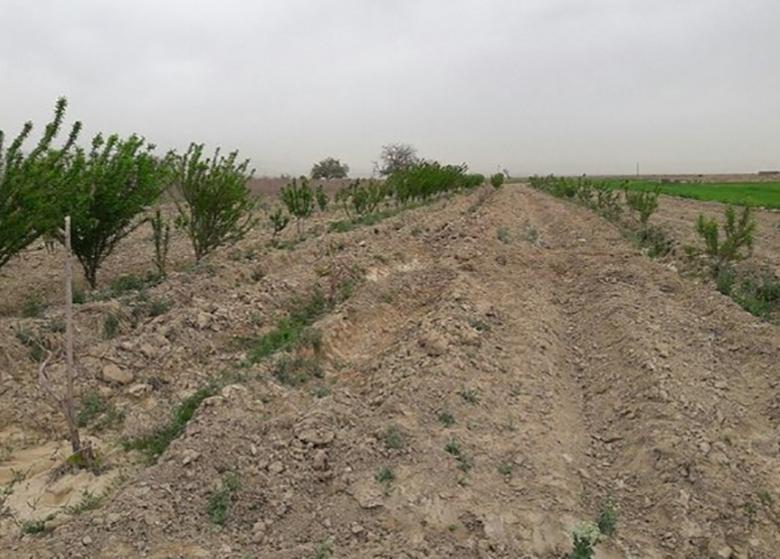 عملیات بیابان زدایی ۲۰هزار هکتارمنابع اراضی بیابانی تهران