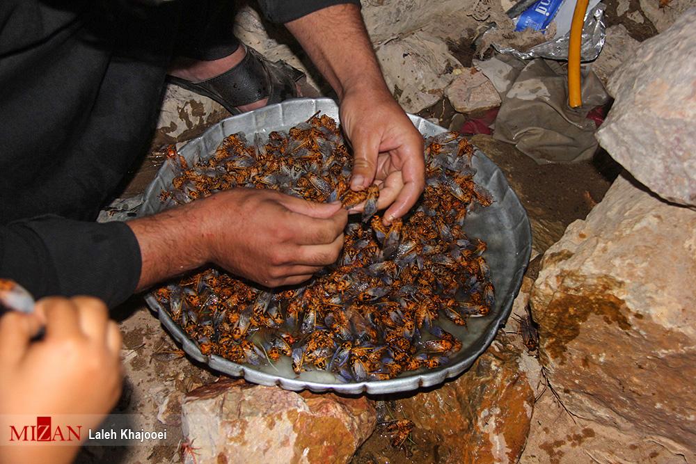 ساعتی در بازار سیرجان فروشندگان «جیرجیرک؛ از کباب خوشمزهتر است!»/ خوردن جیرجیرک حرام است