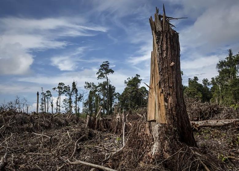 نقش فزآینده اروپا در فرآیند جنگلزدایی