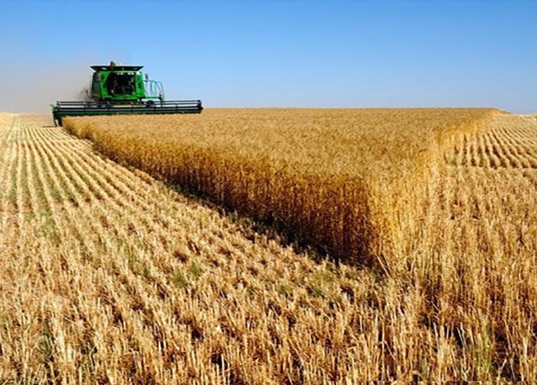 افزایش ۴ درصدی قیمت جهانی گندم