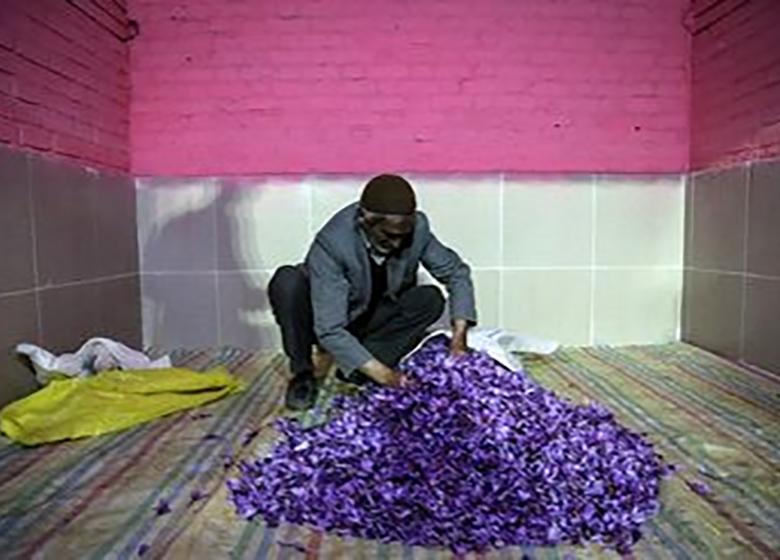 زعفرانهای دپو شده راهی بازار شد