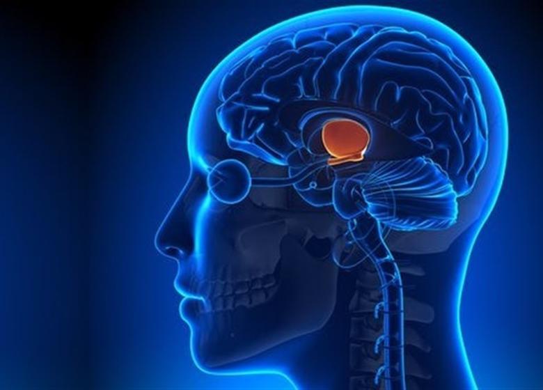 راز زندگی طولانی در مغز انسان پنهان است