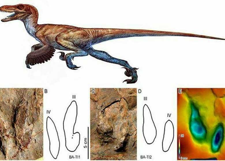 کشف ردپای دایناسورها در شهر بلده نور
