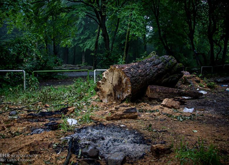 تجاوز به حریم تختجمشید به بهانه محیط زیست