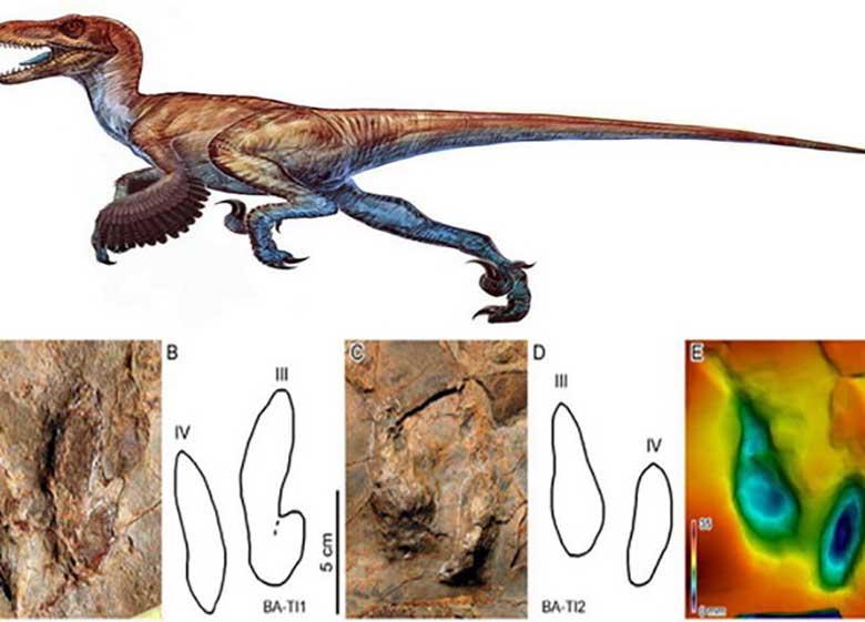 کشف ردپای دایناسورهای پردار در ایران