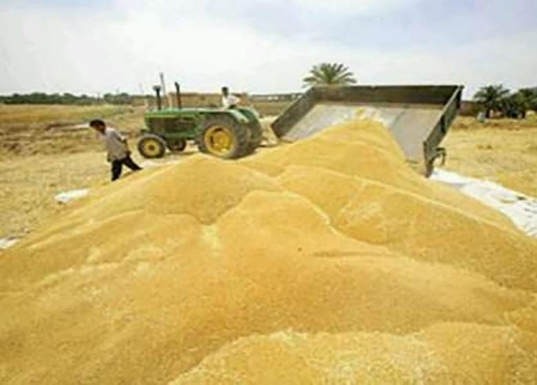 افزایش ۷۹ درصدی ضریب خودکفایی محصولات کشاورزی در دولت یازدهم