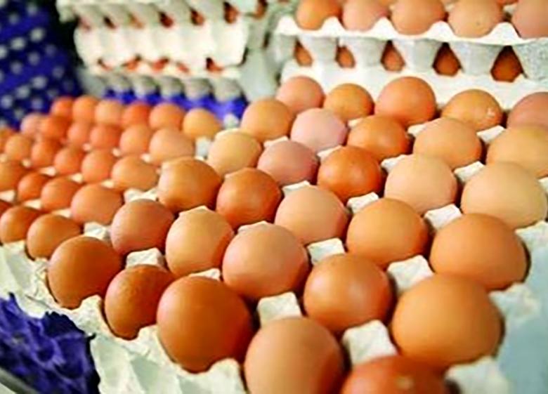 وجود ۱۶۰هزارتن تخم مرغ مازاد در کشور