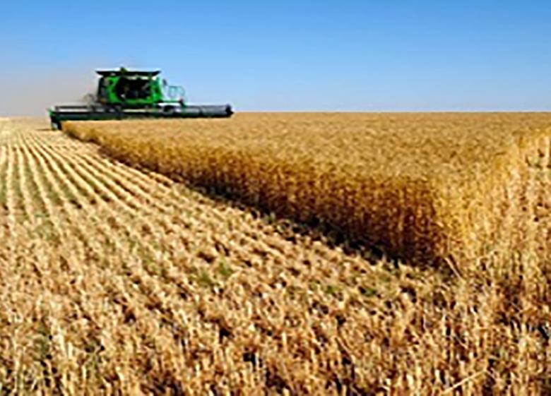 خردبودن اراضی کشت چالشی در توسعه کشاورزی پایدار