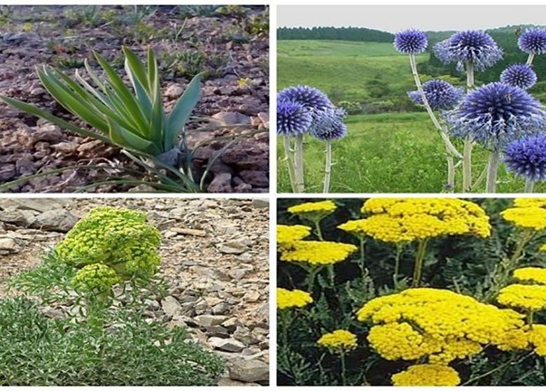 ۱۷۰ تعاونی روستایی گیاهان دارویی تشکیل میشود