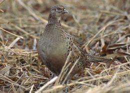 مرگ پرندگان، سنسور تشخیص آلایندگی یک واحد صنعتی!