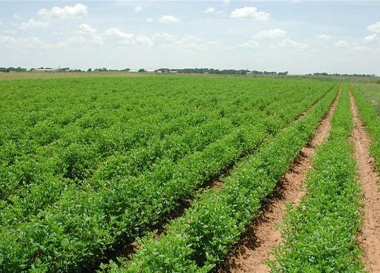 مهر تایید دیوان محاسبات کشور بر رتبه بندی نظام مهندسی کشاورزی