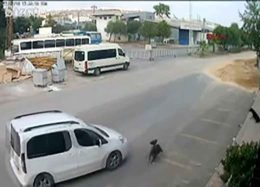 له شدن یک سگ زیر چرخهای اتومبیل + فیلم