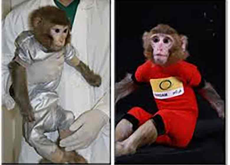میمون های فضائی ایران بچه دار شدند