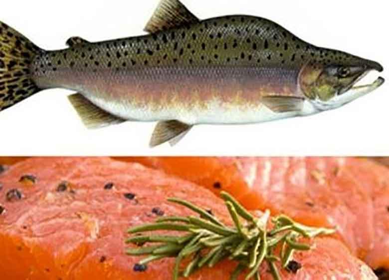 تقلبی در فروش ماهی سالمون صورت نگرفت