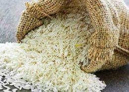 واردات برنج در فصل برداشت!