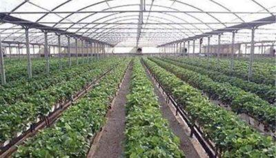 توسعه گلخانه، تنها راه نجات کشور از بحران کمآبی