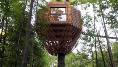 ساخت خانه های لوکس در نوک درختان