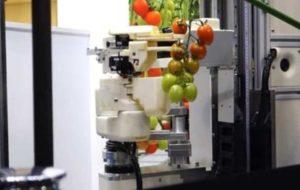 ربات گوجه فرنگی چین ساخته شد