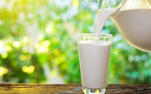 آنچه از شیر نمی دانستید/ بهترین «شیر» کدام است؟
